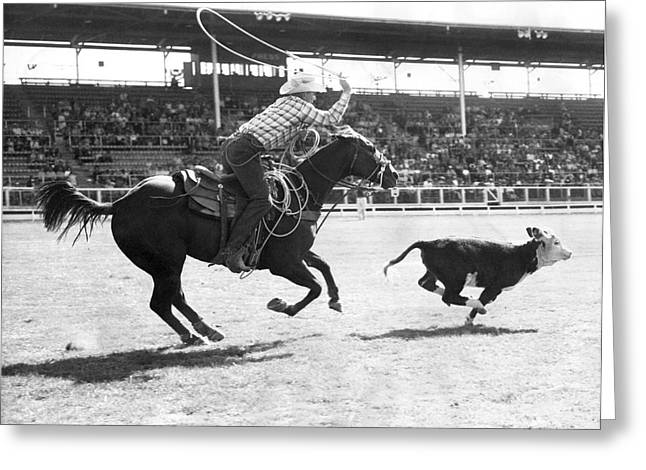 Rodeo Calf Roping Contest Greeting Card by Underwood Archives