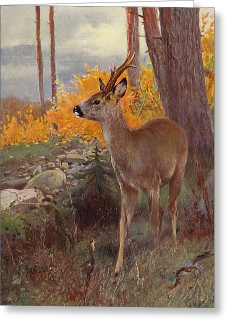 Roe Deer Greeting Card by Wilhelm Kuhnert