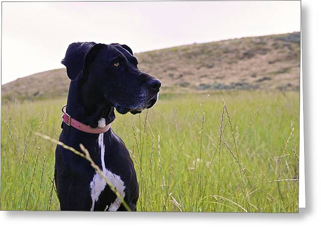 Puppies Photographs Greeting Cards - Rogue Greeting Card by Heidi Baxter