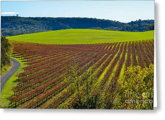 Blue Grapes Greeting Cards - Rolling Hills and Vineyards Greeting Card by CML Brown