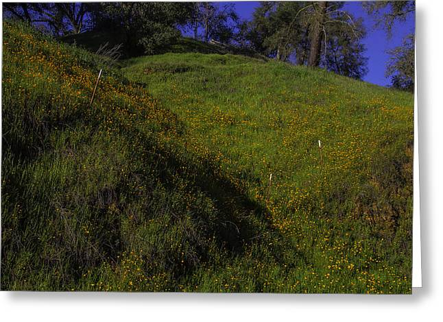Rolling Hills With Poppies Greeting Card by Garry Gay