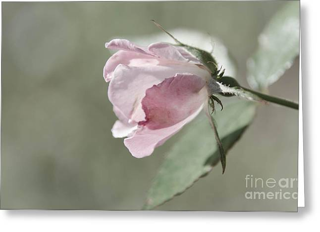 Concept Photographs Greeting Cards - Romance Greeting Card by Andrea Anderegg