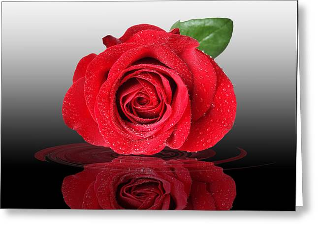 Water Drops On Rose Greeting Cards - Romance Greeting Card by Gill Billington
