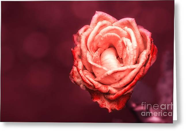 Rose Petals Greeting Cards - Romantic Greeting Card by Charuhas Images
