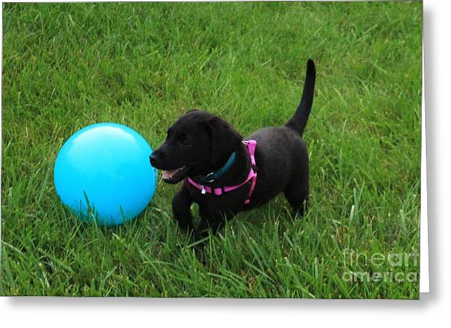 Chocolate Lab Greeting Cards - Romping Around Greeting Card by Taylor Munson