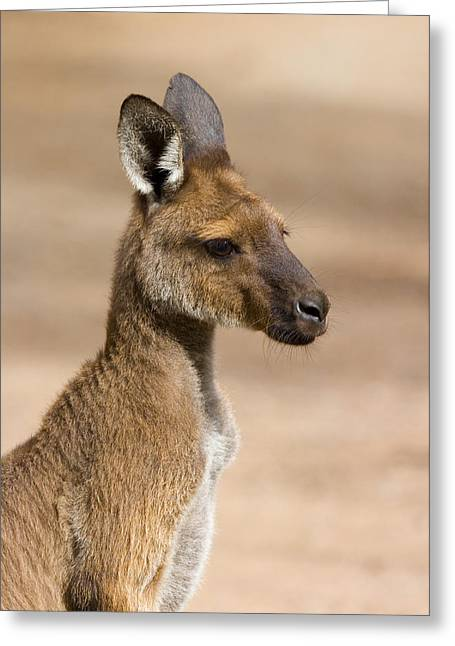 Marsupial Greeting Cards - Roo Portrait Greeting Card by Mike  Dawson