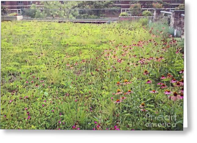 Student Housing Greeting Cards - Rooftop Meadow Greeting Card by Shelly Weingart