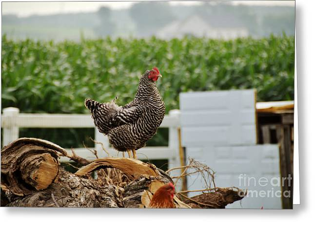 Gallus Gallus Greeting Cards - Rooster Greeting Card by George Mattei