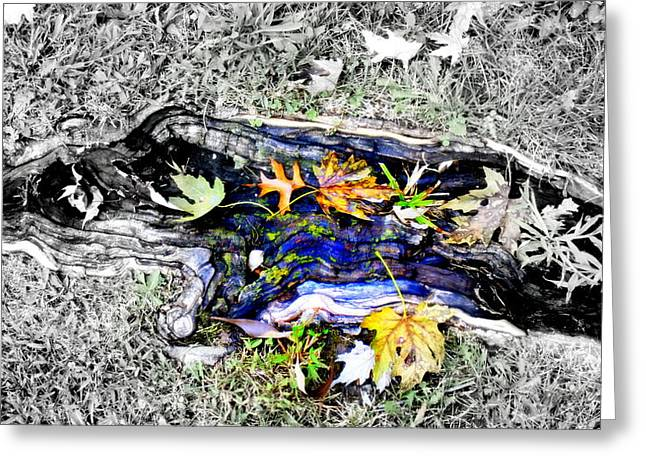 Tree Roots Photographs Greeting Cards - Rooted Greeting Card by Deborah  Crew-Johnson