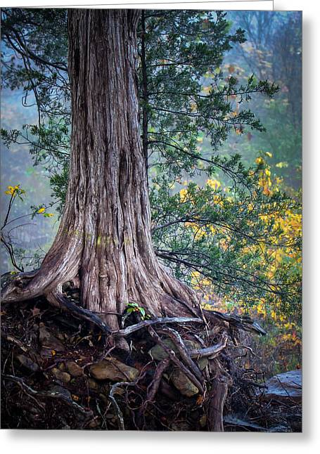 Rooted Greeting Card by James Barber