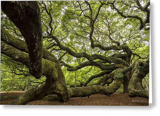 Roots Greeting Card by Bill Cantey