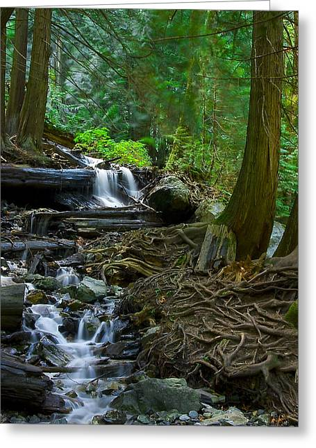 Tree Roots Photographs Greeting Cards - Roots Greeting Card by Naman Imagery