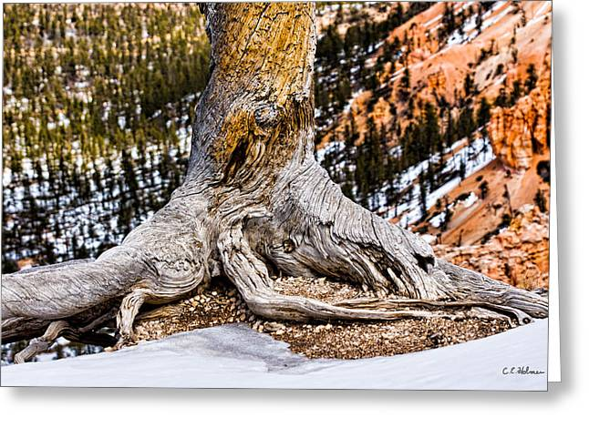 Roots Gripping The Edge Greeting Card by Christopher Holmes