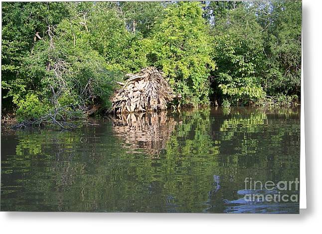 Roots in the Stream Greeting Card by Deborah MacQuarrie