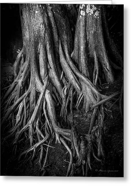 Roots Greeting Card by Marvin Spates