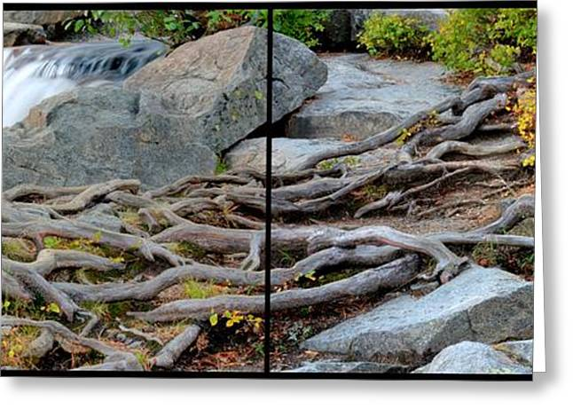 Tree Roots Greeting Cards - Roots of Change Greeting Card by Brad Scott