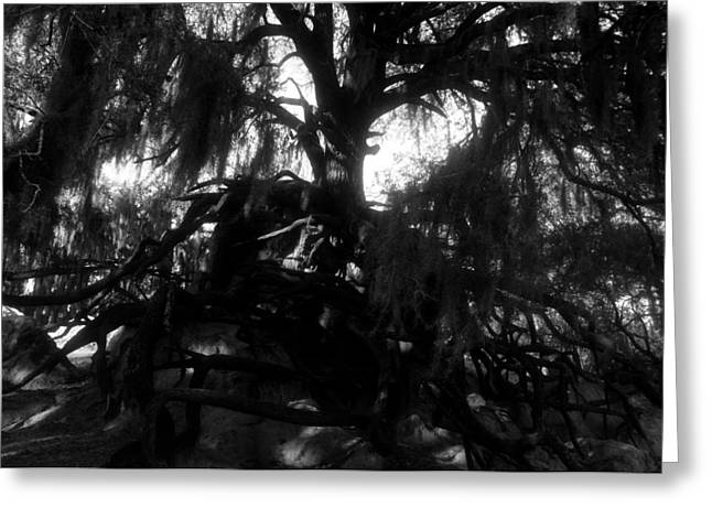Roots of life Greeting Card by David Lee Thompson