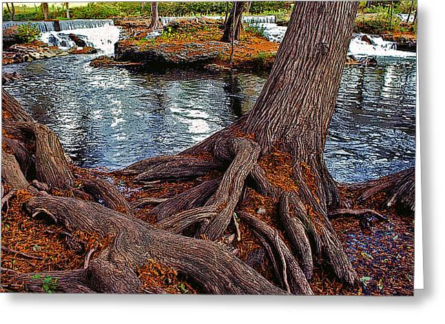 Tree Roots Greeting Cards - Roots on the River Greeting Card by Stephen Anderson