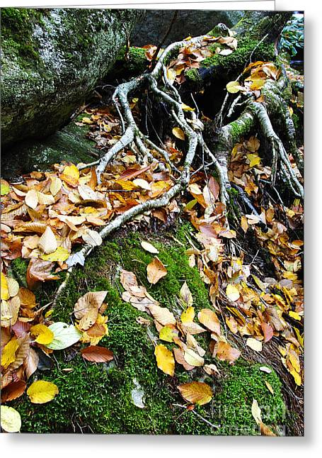 Tree Roots Greeting Cards - Roots Rock Reggae Greeting Card by Thomas R Fletcher