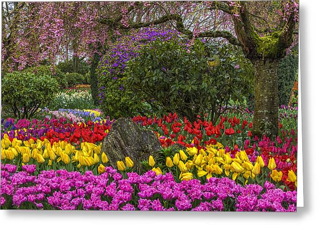 Roozengaarde Flower Garden Greeting Card by Mark Kiver