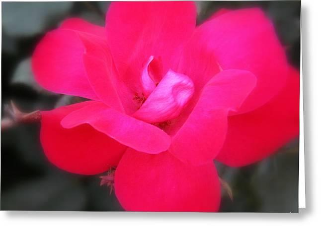 Rosa Roja Greeting Card by Ed Smith