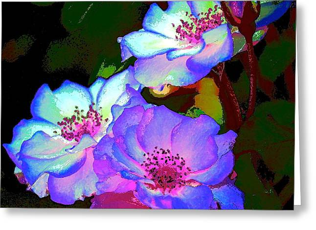 Rose 127 Greeting Card by Pamela Cooper