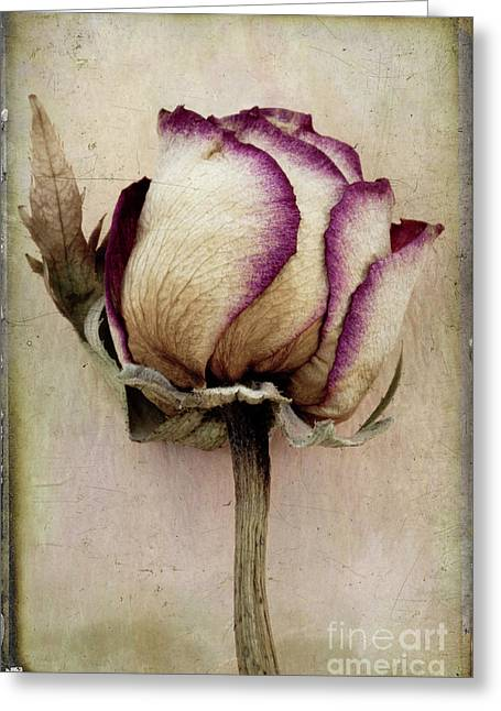 Layered Textures Greeting Cards - Rose 2 Greeting Card by Marion Galt