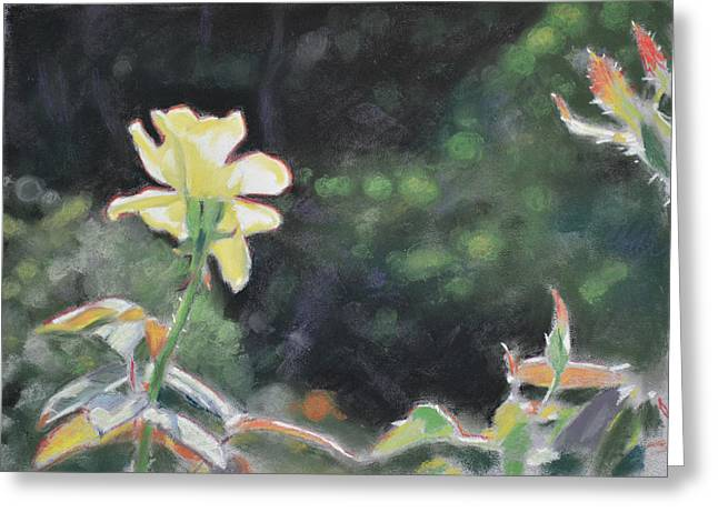 Spring Pastels Greeting Cards - Rose 37 Greeting Card by Christopher Reid
