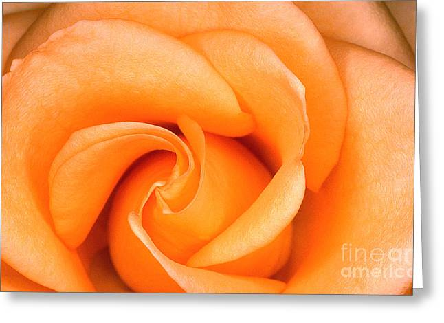 Transparency Geometric Greeting Cards - Rose 6 Greeting Card by Rich Killion