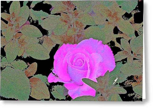 Rose 97 Greeting Card by Pamela Cooper