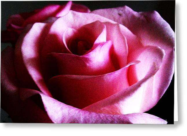 Rose At Night Greeting Card by Marsha Heiken