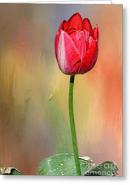 Texture Overlay Greeting Cards - Red Tulip at Sunset by Kaye Menner Greeting Card by Kaye Menner