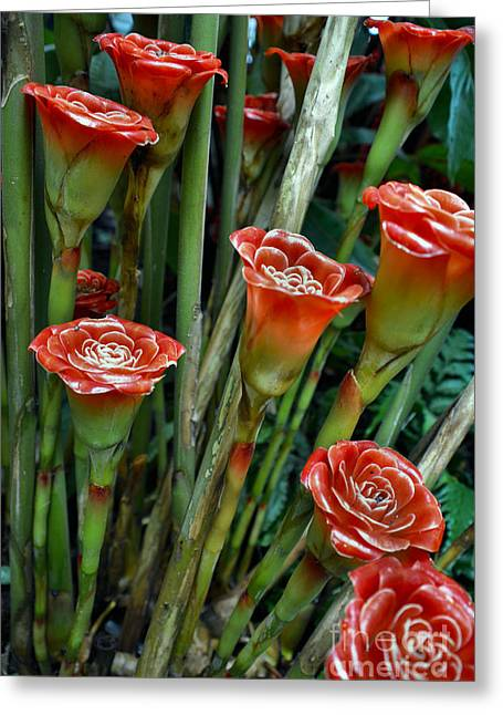 Petal Tapestries - Textiles Greeting Cards - Rose Batch Greeting Card by Edna Weber