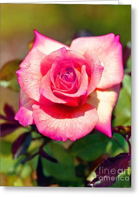 Rose Pleasure Greeting Cards - Rose Greeting Card by Bert Hoferichter