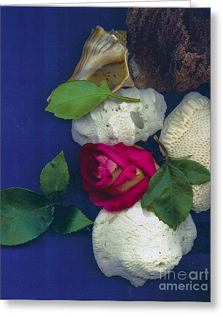 Rose Corals Shell Greeting Card by Leonor Shuber