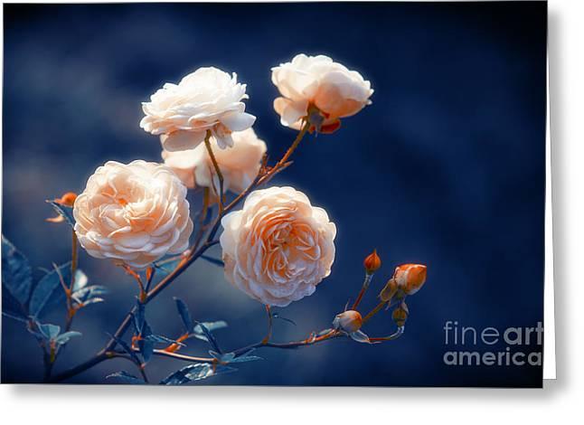 Rose Petals Greeting Cards - Rose Garden Greeting Card by Konstantin Sevostyanov