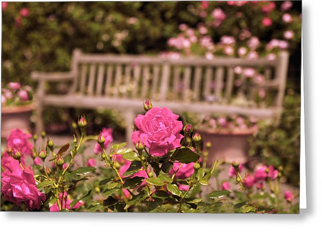 Trellis Digital Greeting Cards - Rose Garden Rest Greeting Card by Jessica Jenney