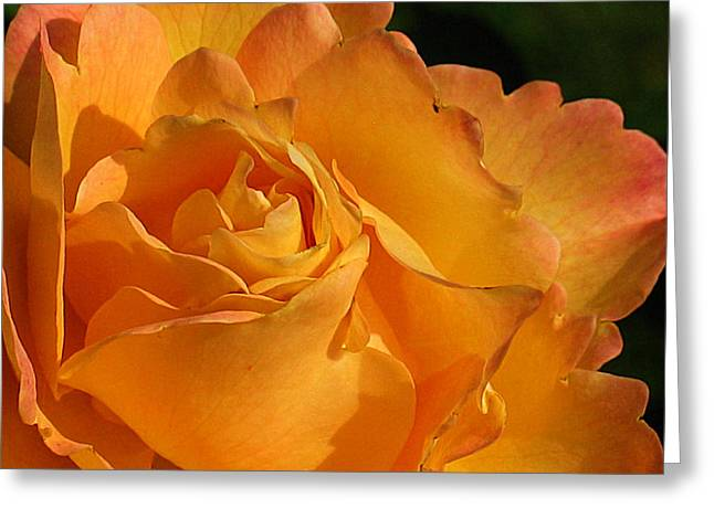 Rose in Ruffles Greeting Card by Mg Rhoades