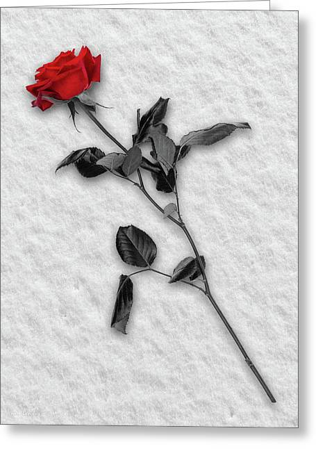 Rose In Snow Greeting Card by Wim Lanclus