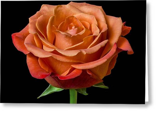 Rose Greeting Card by Jim Hughes