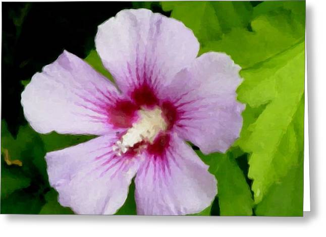 Rose Of Sharon Greeting Cards - Rose of Sharon close up Greeting Card by Anita Burgermeister