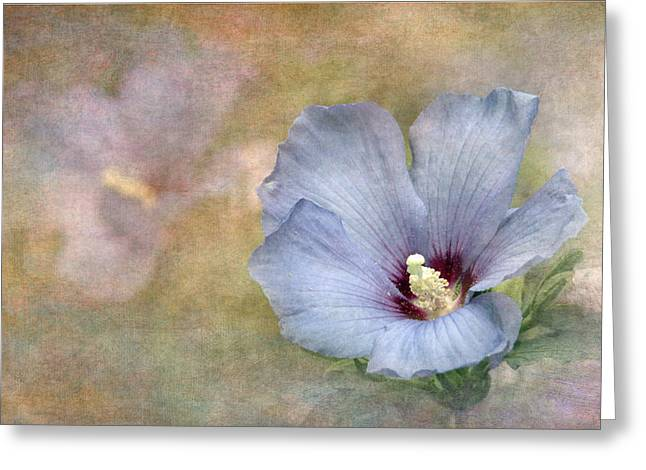 Rose Of Sharon Greeting Cards - Rose of Sharon - Hibiscus Greeting Card by Angie Vogel