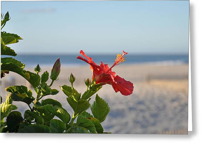 Surf City Greeting Cards - Rose of Sharon on the Beach Greeting Card by Joanie Drake