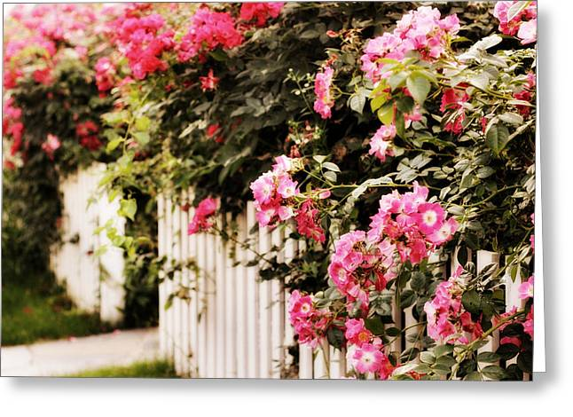 Picket Fence Greeting Cards - Rose Picket Fence Greeting Card by Jessica Jenney