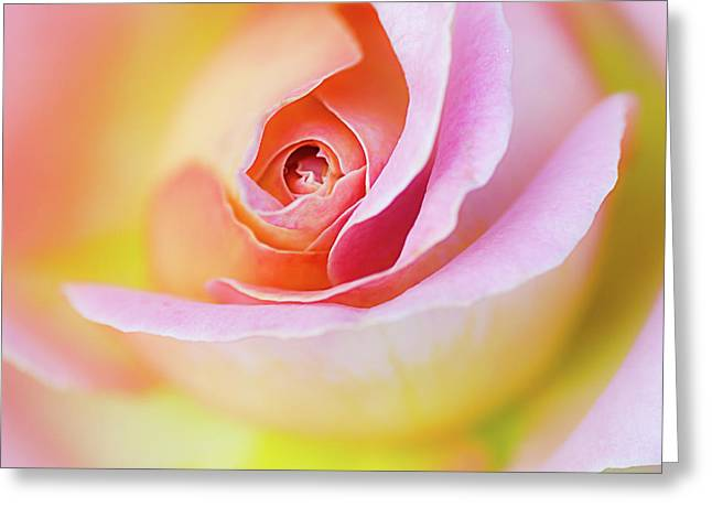 Rose Pink Petals And Drops Greeting Card by Julie Palencia