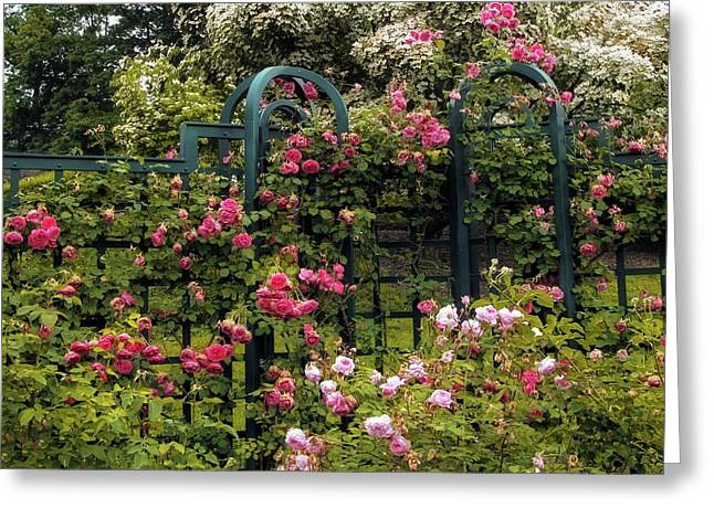 Rose Trellis Greeting Card by Jessica Jenney