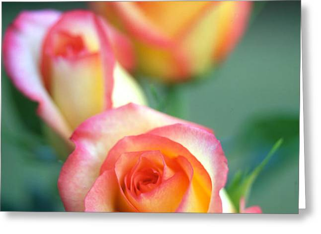 Rose Trio Greeting Card by Kathy Yates