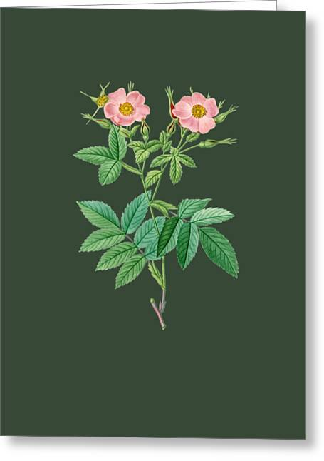 Bonnie Rose Art Greeting Cards - Rose13 Greeting Card by The one eyed Raven