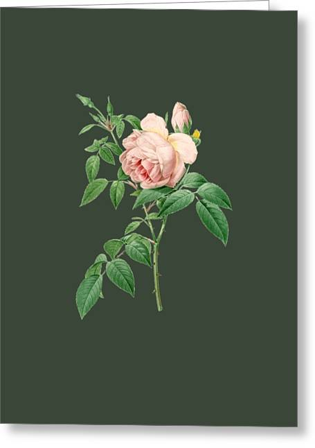 Bonnie Rose Art Greeting Cards - Rose14 Greeting Card by The one eyed Raven