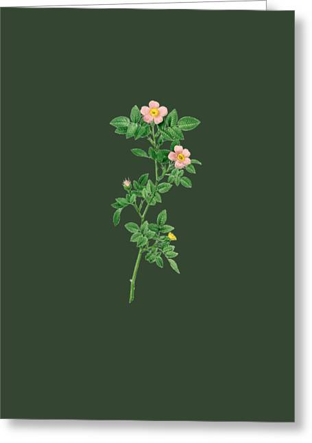 Bonnie Rose Art Greeting Cards - Rose15 Greeting Card by The one eyed Raven